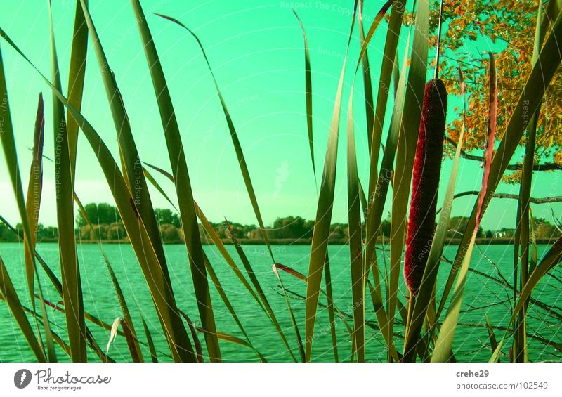 On the lookout Green Beach Summer Common Reed Lake Bushes Body of water Water Sky Bamboo stick Sand Idyll Nature Hiding place Coast