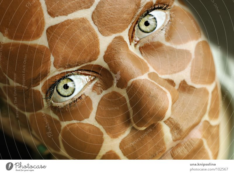 safari II Face Eyes Mouth Green Eyelash Intensive Giraffe wildlife Patch Saucer-eyed Eczema Colour photo Portrait photograph Make-up Looking into the camera