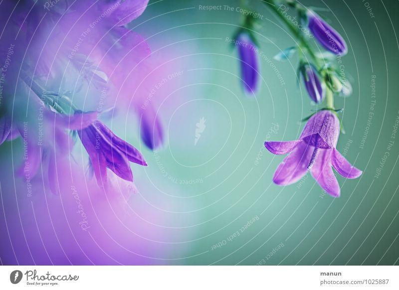 Nature Blue Plant Green Summer Flower Blossom Natural Spring Soft Delicate Violet Turquoise Fragrance Positive Spring fever