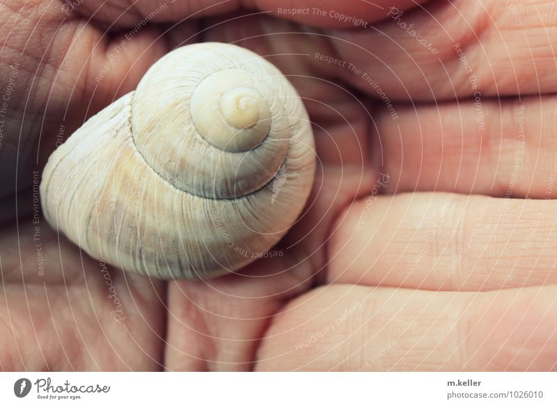 skin, hand, snail shell Beautiful Skin Wellness Well-being Contentment Senses Relaxation Calm Meditation Hand Snail shell Vineyard snail Love of animals Purity