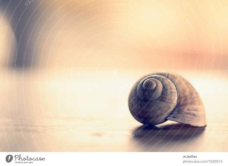 snail shell Elegant Style Relaxation Environment Nature Elements Snail shell Crumpet Esthetic Historic Trust Protection Safety (feeling of) Secrecy To console
