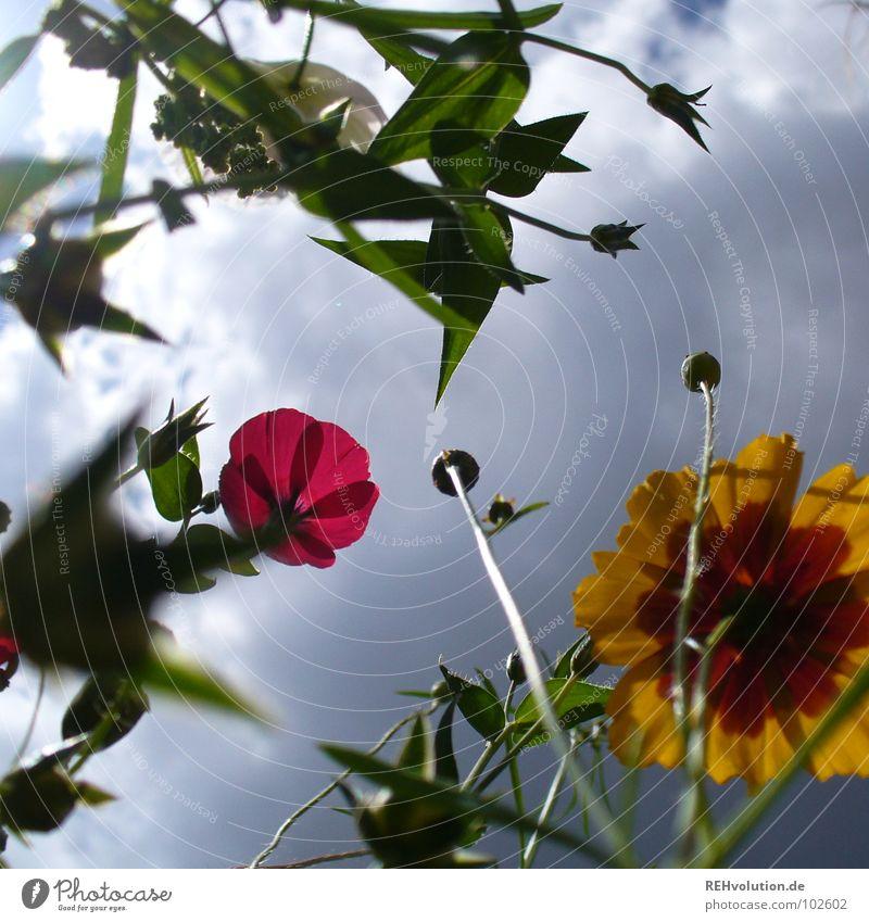 Sky Flower Plant Summer Clouds Cold Meadow Blossom Grass Rain Power Fear Tall Force Fresh Growth