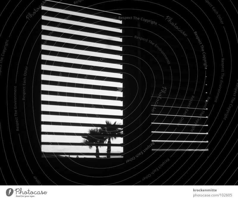 Vacation & Travel Window Room Stripe Spain Palm tree Striped Wake up Shutter