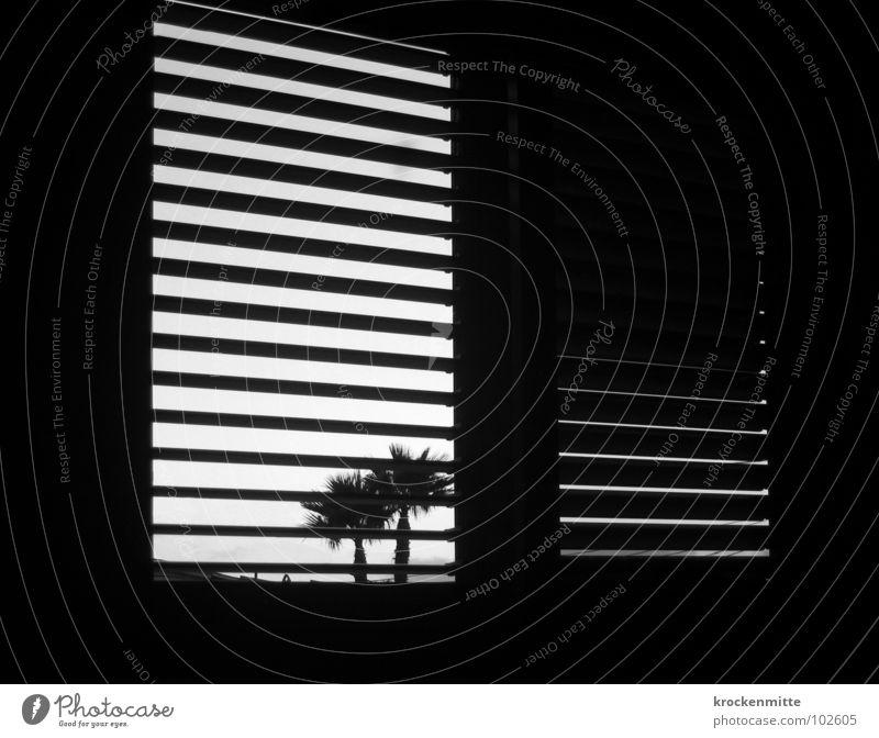 Where am I? Where am I? Window Palm tree Back-light Vacation & Travel Room Shutter Spain Stripe Striped Wake up Morning Black & white photo