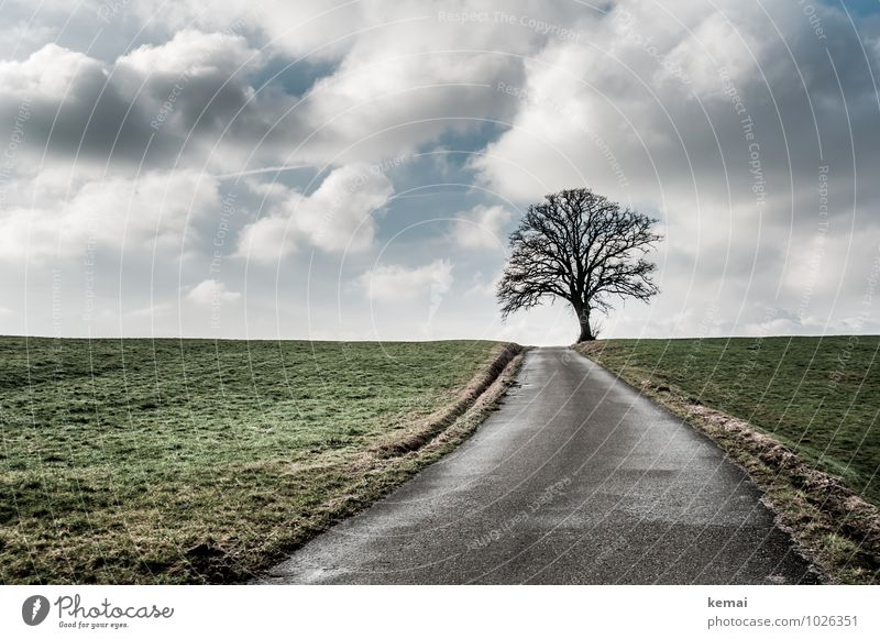 Sky Nature Tree Loneliness Landscape Calm Clouds Winter Environment Street Lanes & trails Exceptional Ice Field Empty Beautiful weather