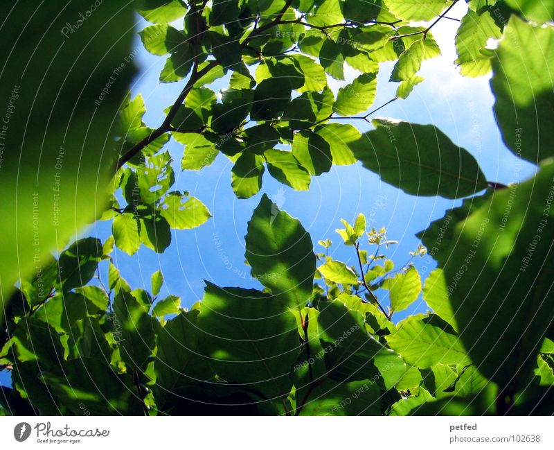Nature Sky Tree Green Blue Summer Joy Leaf Clouds Yellow Spring Garden Weather Branch Tree trunk God