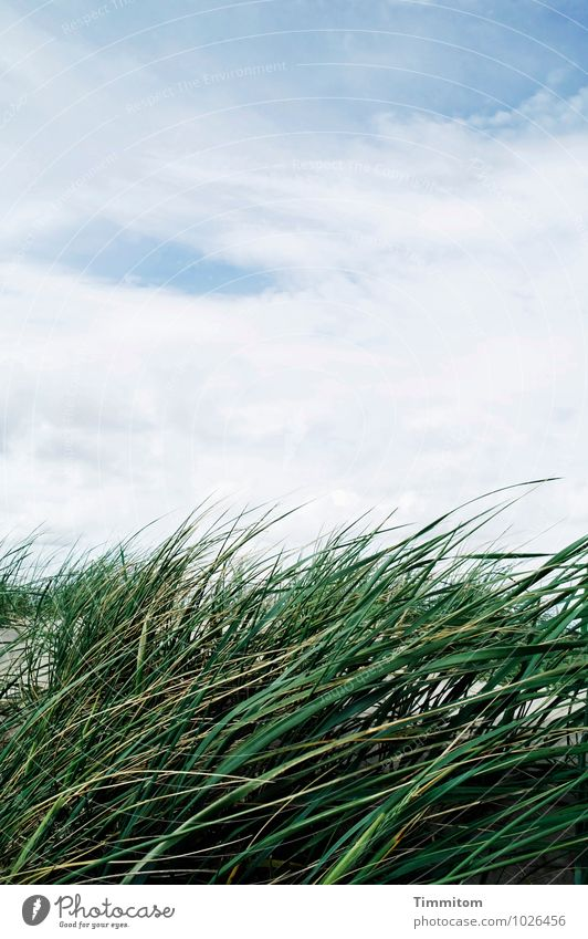 Sky Nature Blue Plant Green White Summer Relaxation Landscape Clouds Environment Emotions Natural Sand Contentment Esthetic