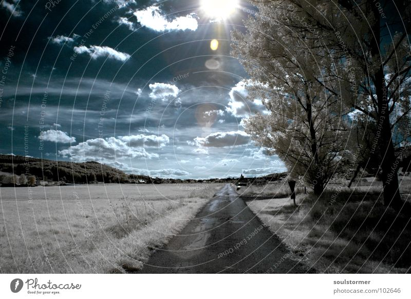Sky Blue White Tree Red Sun Clouds Black Meadow Snow Grass Lanes & trails Funny Think Dream Lighting