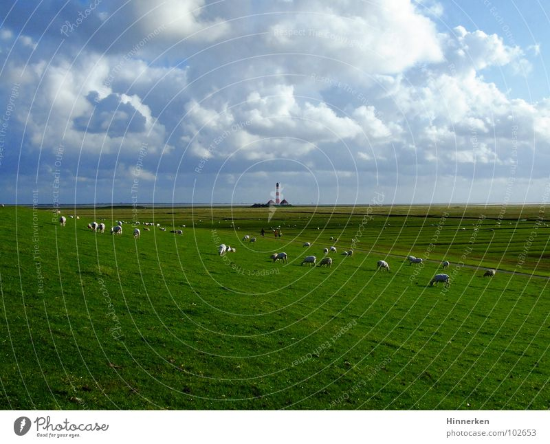 Sky Beach Clouds Far-off places Coast Lighthouse Sheep North Sea Schleswig-Holstein Dike North Frisland Westerhever