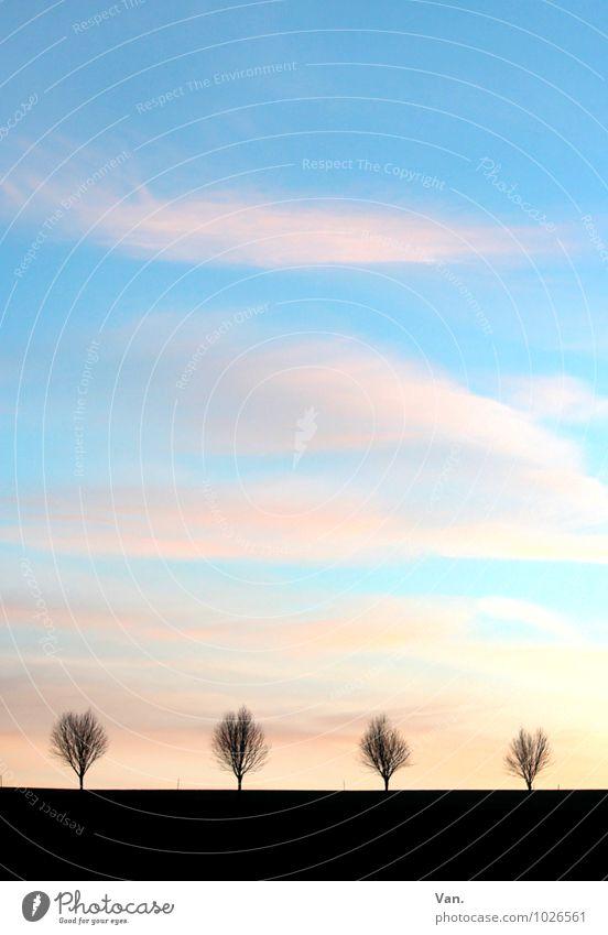 Sky Nature Blue Tree Landscape Clouds Far-off places Black Horizon Air Avenue