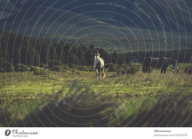 wild horses Equestrian sports Environment Nature Landscape Foliage plant Meadow Field Forest Mountain Patagonia Argentina Animal Horse 2 Herd Adventure Freedom