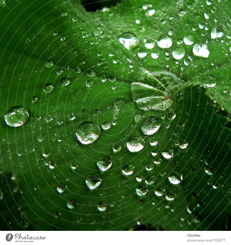 Nature Water Green Plant Summer Leaf Cold Autumn Spring Rain Drops of water Wet Damp Botany Foliage plant Northern Forest