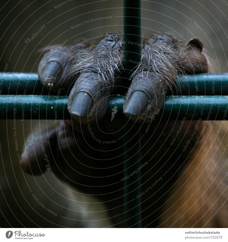 Hand Loneliness Animal Sadness Dirty Fingers Grief Zoo Wrinkles Fence Captured Mammal Monkeys Fingernail Circus