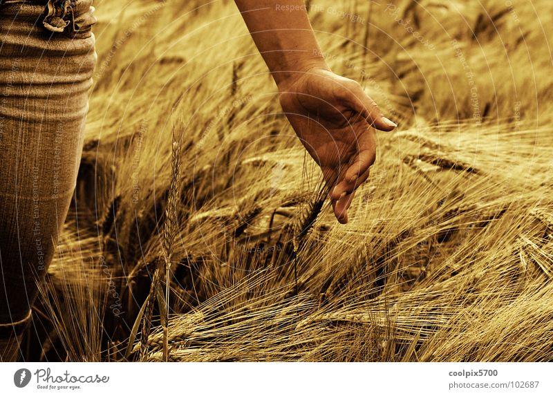 Hand Summer Leisure and hobbies Agriculture Farmer Seasons Harvest Grain Cornfield Wheat Ear of corn Caress Oats