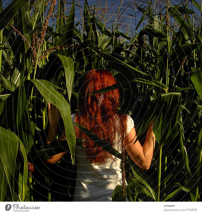 next to Maize field Field Plant Green Red Woman Summer Nature Blue fiery red Hair and hairstyles