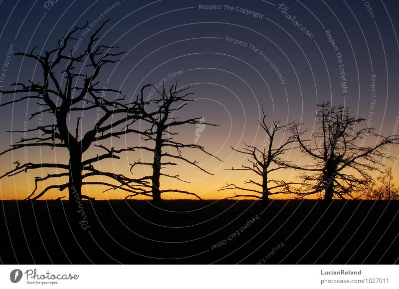 Tree silhouettes at sunrise Nature Plant Sky Cloudless sky Night sky Sunrise Sunset Sunlight Winter Beautiful weather Forest Canyon Grand Canyon valley edge