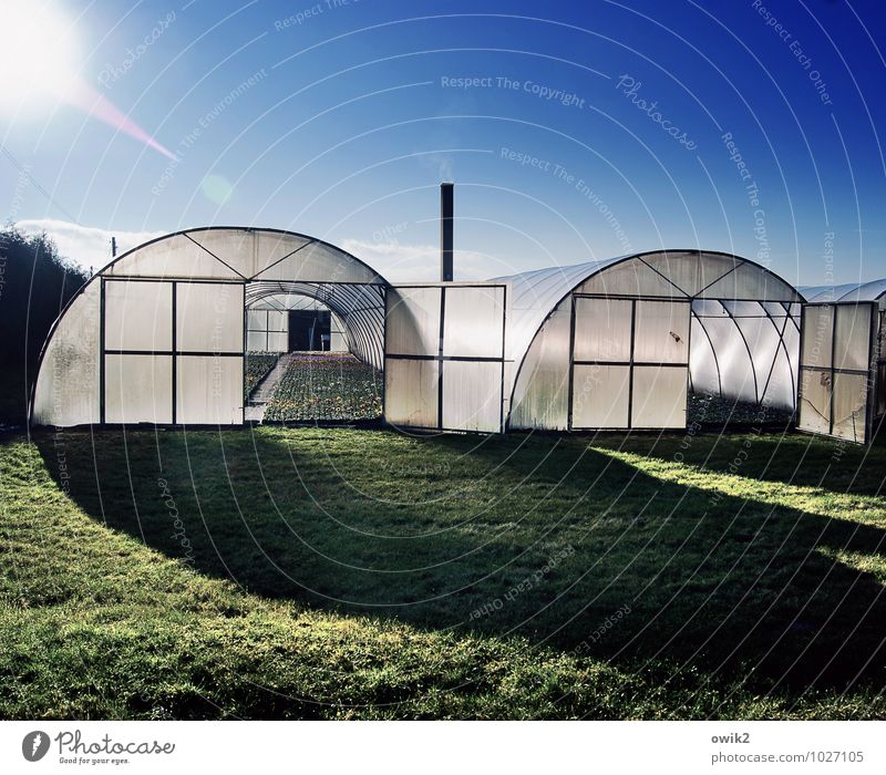 under foil Environment Nature Landscape Plant Cloudless sky Climate Beautiful weather Grass Foliage plant Agricultural crop Manmade structures Building