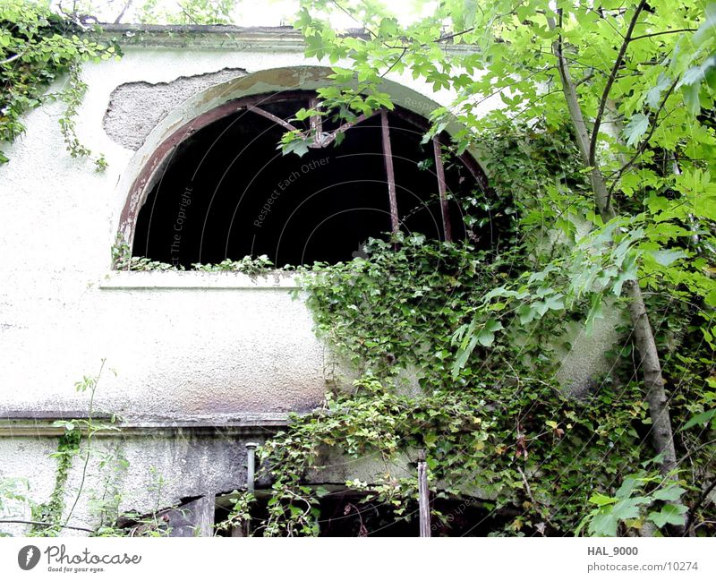 In Sleeping Beauty Sleep Architecture House (Residential Structure) Derelict grow together Old