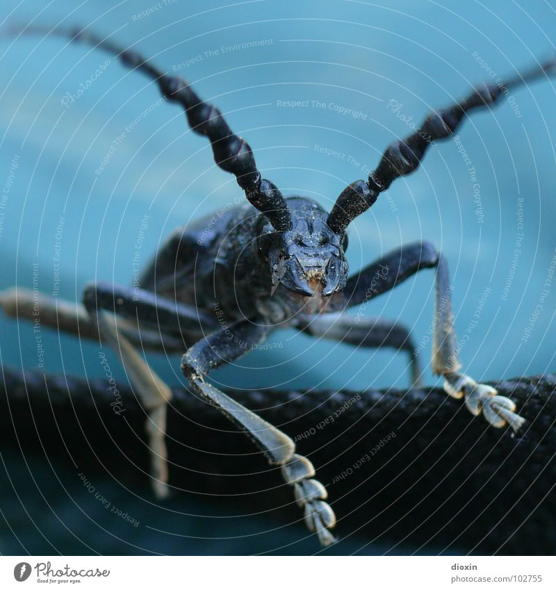 Nature Blue Animal Black Environment Flying Fear Posture Insect Creepy Beetle Crawl Timidity Horror Feeler Looking