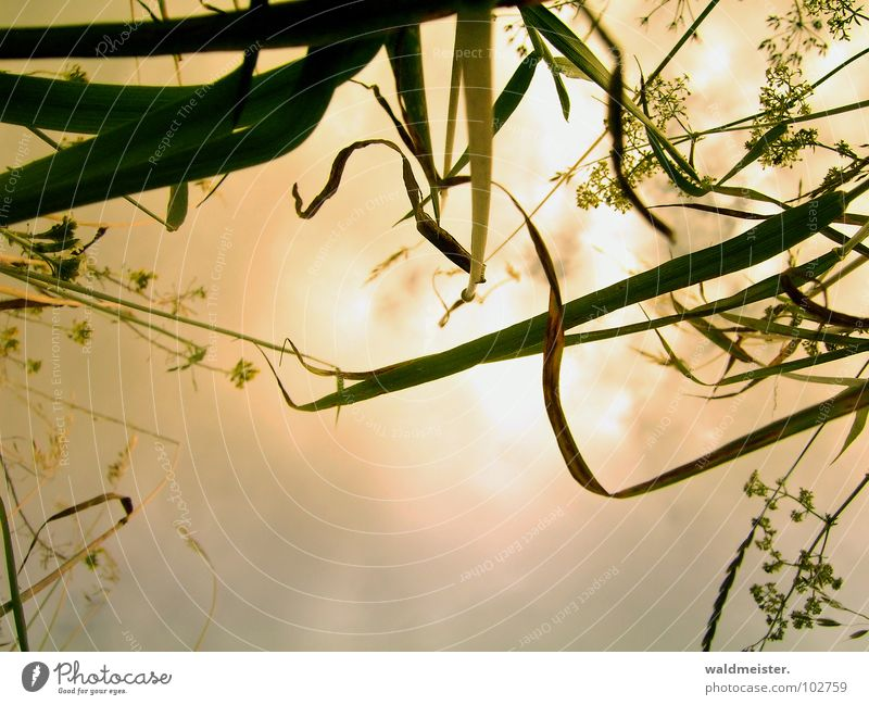Nature Sky Flower Clouds Meadow Grass Dream Romance Surrealism Mystic Fairy tale
