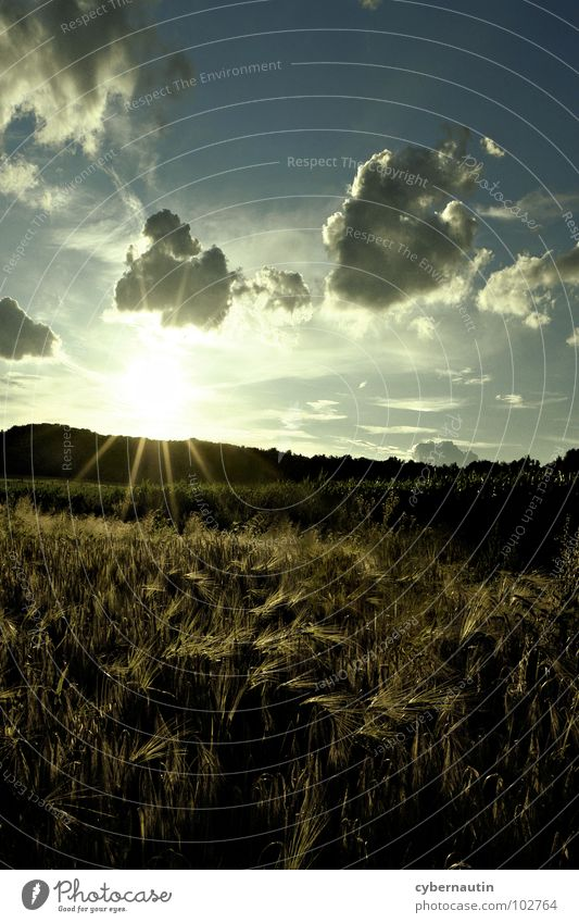 Field, forest and meadow photo Summer Meadow Sunset Sunbeam Clouds Grain Harvest Sky Evening