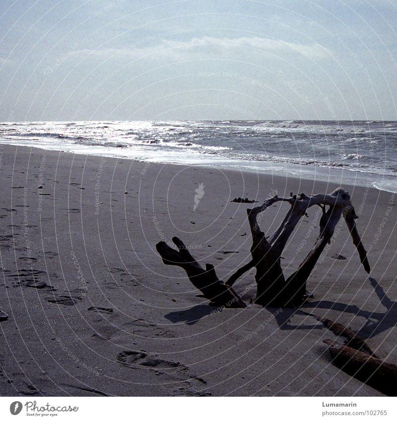 Deep sleep Beach Coast Ocean Lake Waves Surf Tree Wood Go under Spill Empty Cold Seasons Autumn Winter Sleep Time Tracks Past Transience Doomed Forget Goodbye