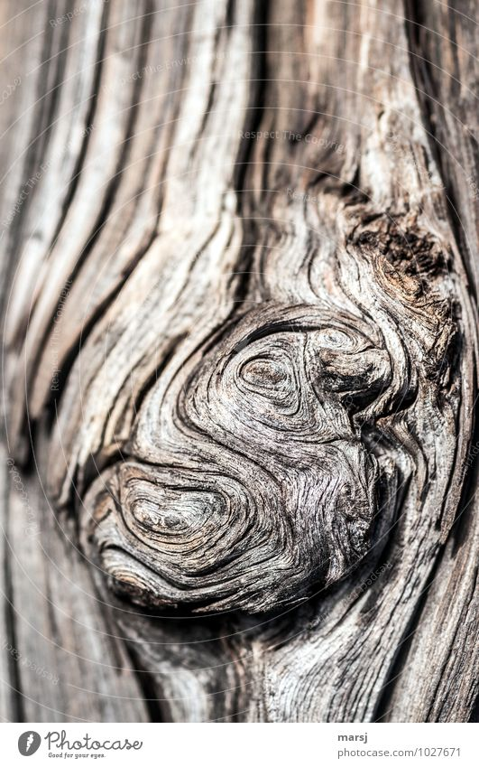 gnarled Nature Wooden board Old Dark Authentic Simple Uniqueness Natural Brown Muddled Gnarled Headstrong Life line Weathered Patina Indefinable Colour photo