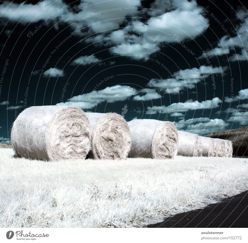 Attention! Infrared Infrared color Black filter Clouds White Wood flour Light Grass Meadow Plant Green Tree Edge of the forest Clump of trees Hay bale Feed