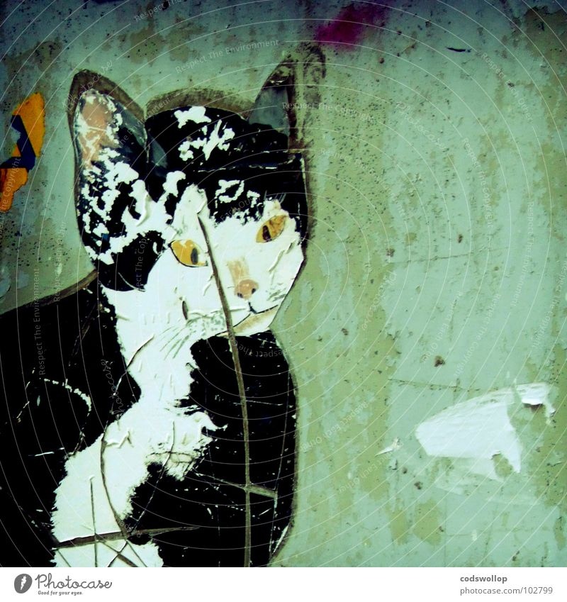 wall moggy Cat Pet Wall (building) Street art Label Chat Shabby Mammal Decoration Graffiti Mural painting mouser rat catcher pussy pussy cat mineral Feral Town