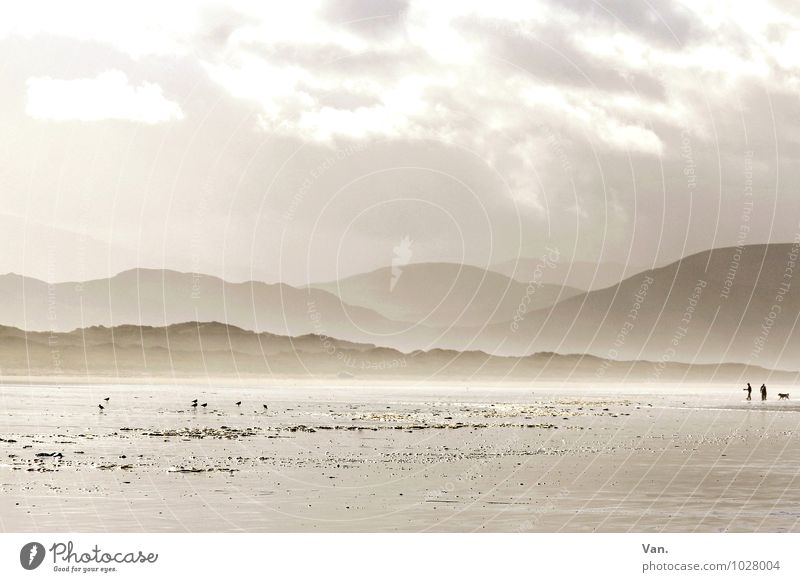 Infinite widths Human being 2 Nature Landscape Sky Clouds Fog Hill Mountain Coast Beach Ocean Ireland Dog 1 Animal Far-off places Fresh Bright Beautiful Gold