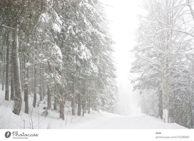 White on White Leisure and hobbies Trip Winter Snow Winter vacation Environment Nature Landscape Plant Climate Weather Beautiful weather Bad weather Storm Wind