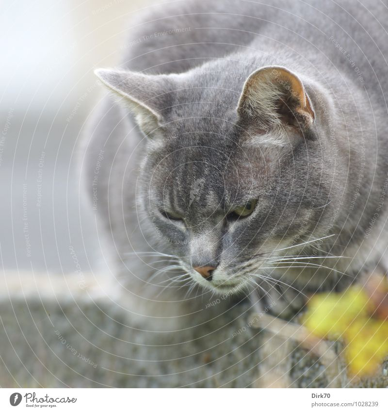 Cat Blue White Summer Animal Black Yellow Wall (building) Wall (barrier) Gray Garden Wild Sit Free Observe Threat