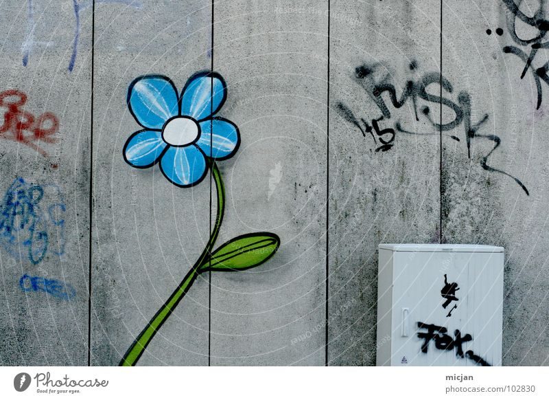 Nature Blue Green Beautiful City Red Flower Street Wall (building) Graffiti Gray Blossom Stone Wall (barrier) Spring Art