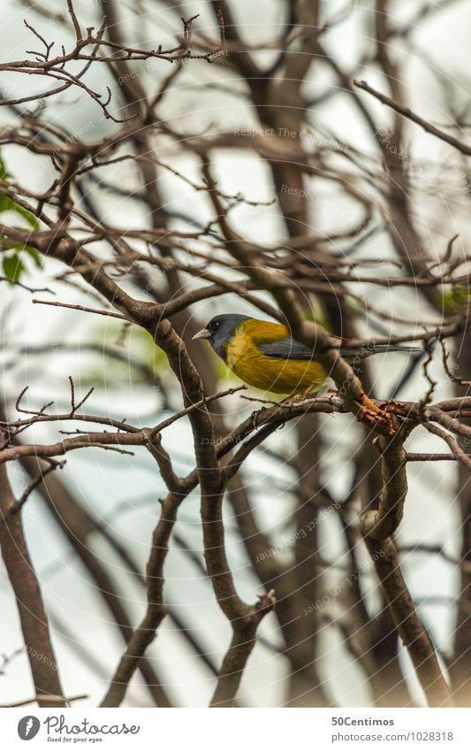 yellow bird - spring is coming Environment Nature Forest Animal Wild animal Bird 1 Sit Leisure and hobbies Curiosity Break Far-off places Calm
