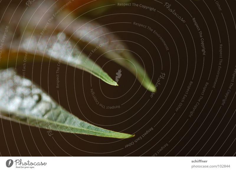 Green Plant Leaf Brown Bushes Point Stalk Beak Center point Mythical creature