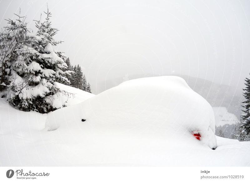 hibernation Lifestyle Vacation & Travel Adventure Winter Snow Winter vacation Mountain Climate Weather Snowfall Tree Fir tree Motoring Vehicle Car White Change