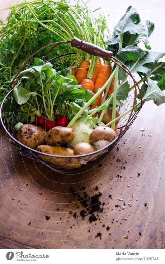Healthy Food Dirty Earth Fresh Nutrition Kitchen Vegetable Delicious Organic produce Mushroom Difference Diet Vegetarian diet Carrot Wooden table
