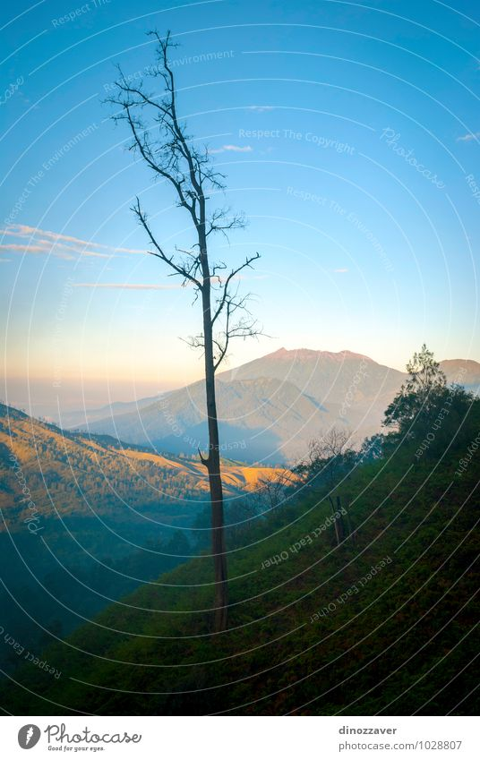 Tree in the mountains Nature Vacation & Travel Man Blue Landscape Clouds Forest Adults Mountain Lake Rock Fog Tourism Dangerous Picturesque