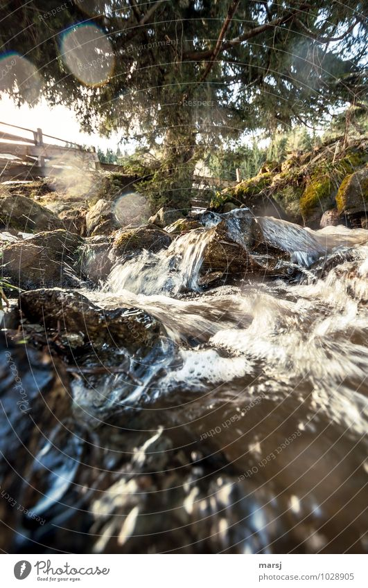 bubbling water of life Nature Landscape Plant Tree Mountain Mountain stream Brook Water Gigantic Fresh Refreshment Bubbling Life Resume Colour photo