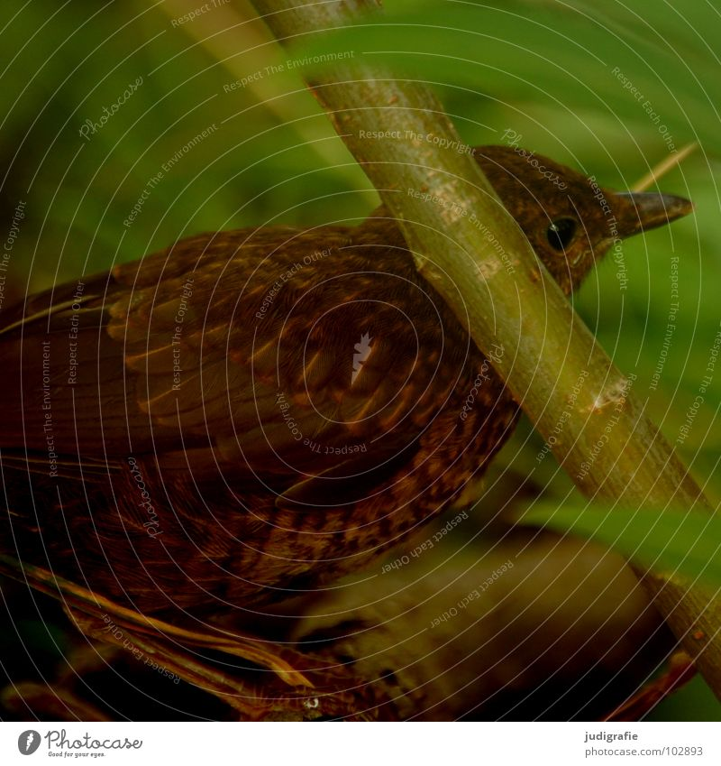 Young Star Bird Animal Feather Environment Brown Green Plant Timidity Caution Summer Protection Nature Hide crouched