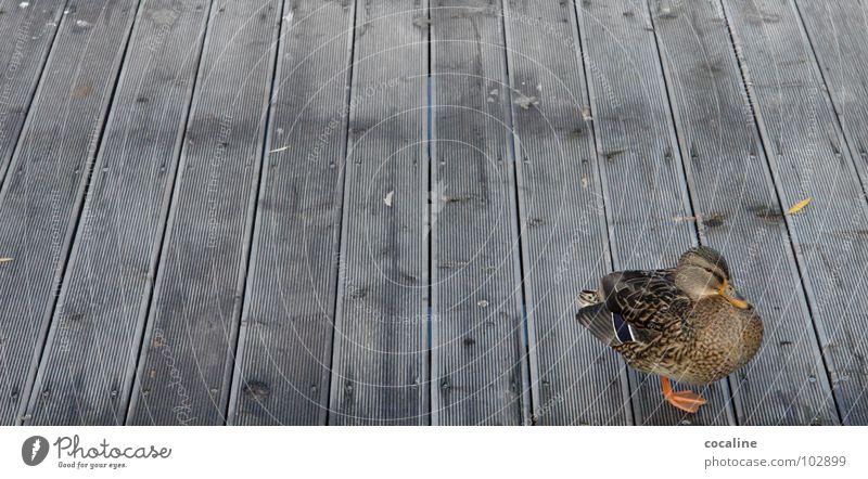 Animal Wood Bird Footbridge Wooden board Duck Beak