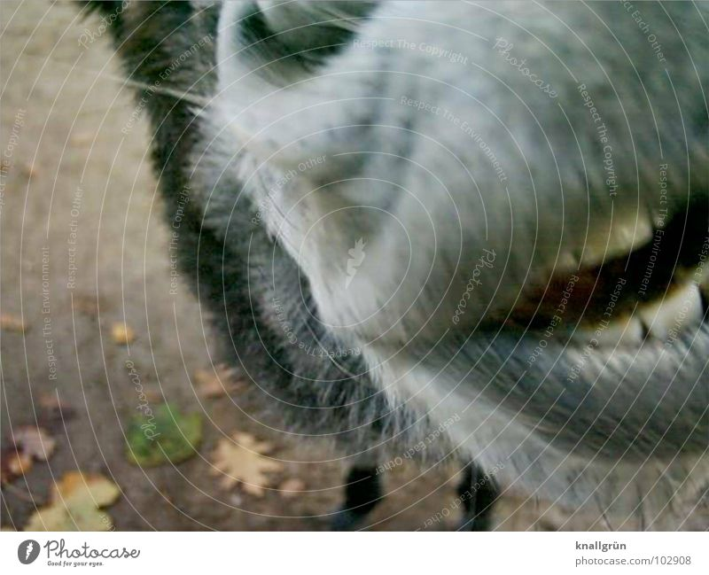 White Leaf Animal Gray Brown Nose Lips Soft Set of teeth Pelt Mammal Flashy Donkey Nostril Nostrils
