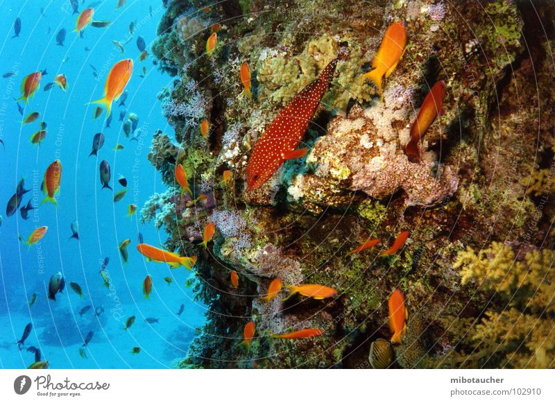 Nature Ocean Underwater photo Vacation & Travel Fish Dive Coral Red Sea