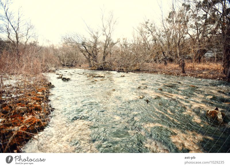 Fast river River Brook brown grass Autumn Nature watercourse