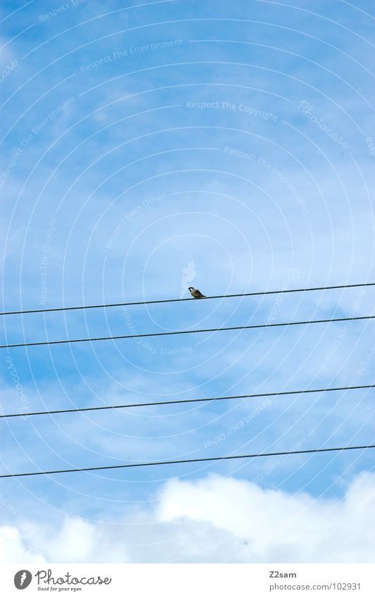 naturally simple Simple Graphic Bird Contentment Clouds Sky Animal Nature Flying Cable Transmission lines Rope Blue