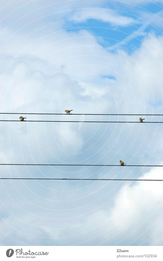 Nature Sky Blue Clouds Animal Contentment Bird Flying Rope Multiple Cable Simple 4 Transmission lines Graphic