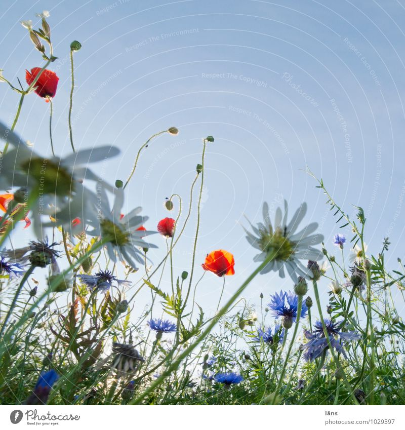 Sky Nature Vacation & Travel Summer Flower Landscape Environment Meadow Blossom Field Growth Tourism Trip Beginning Blossoming Beautiful weather