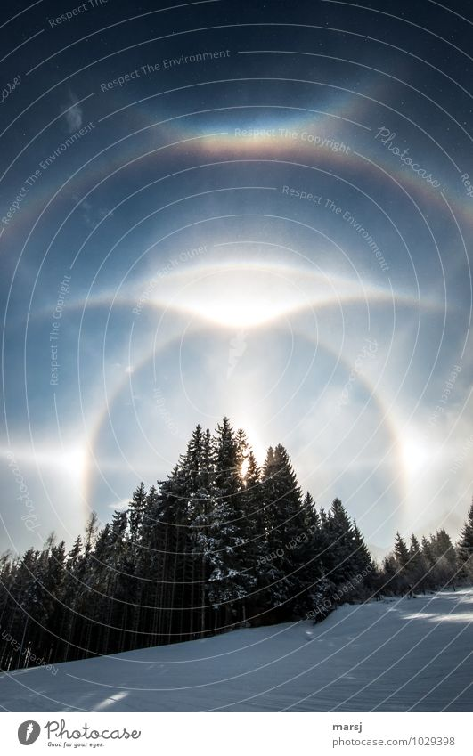 The sparkle and shine of the ice crystals Nature Landscape Sky Cloudless sky Winter Beautiful weather Ice Frost Snow Forest circumzenithal arch Glittering