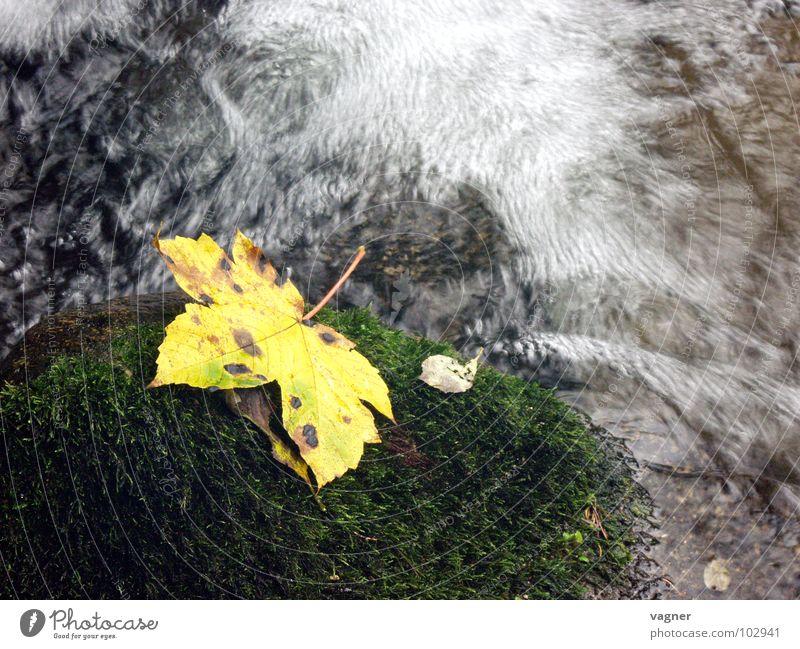 autumn Leaf Yellow Brook Mountain stream Autumn Multicoloured Long exposure River Water Stone autumn mood