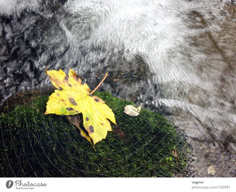 Water Leaf Yellow Autumn Stone River Brook Mountain stream